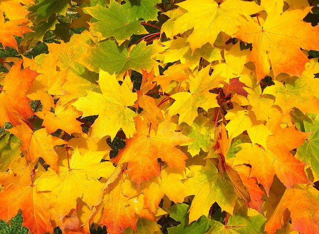 Fall Leaf Pick-Up Schedule